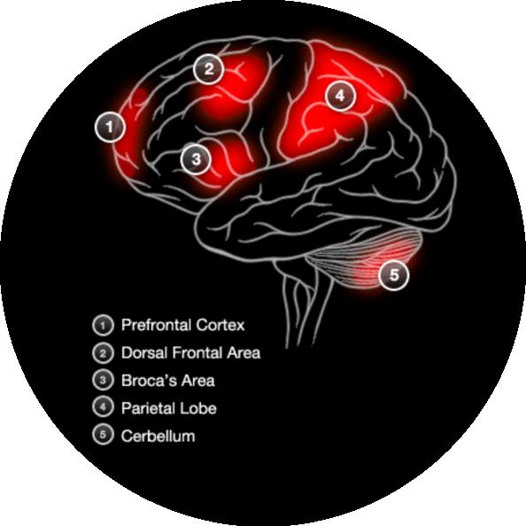Brain Activity Working Memory