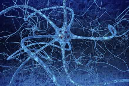 Are Neurons Lost with Ageing?